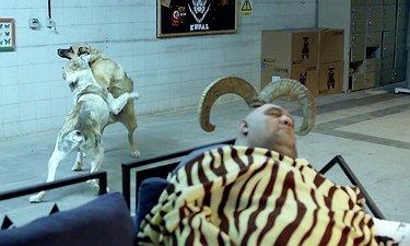 دعوتنامه تصویری «فیلم سینمای کوپال» (کیفیت HD)
